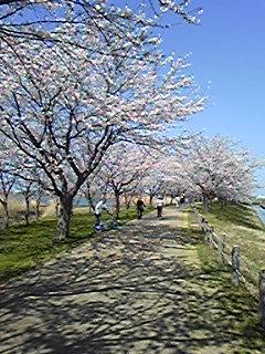 桜満開だぁ〜