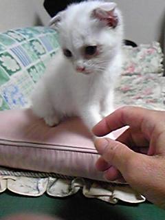 猫に癒されて〜