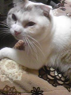 我が家の愛猫ココ