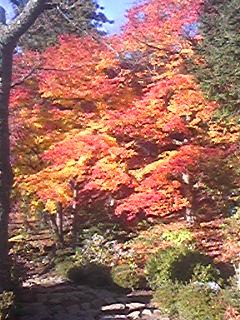 秋の近江路へ