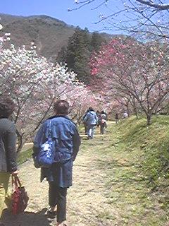 花桃の里へ〜