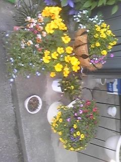 我が家の花が満開〜