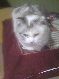 愛猫ココ4周年です