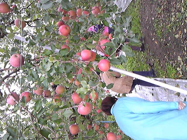 りんご狩りに〜